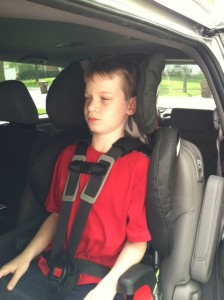 8 yr old in harness